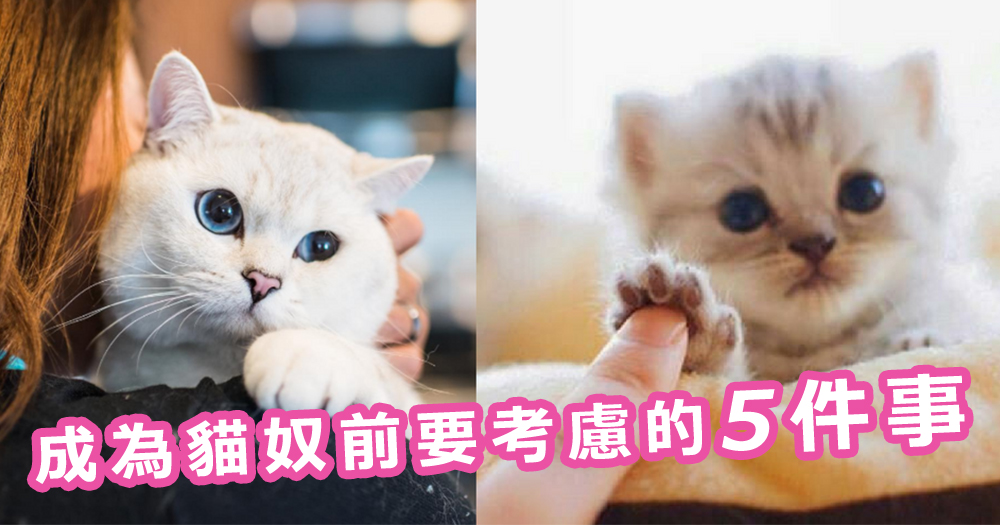 養貓前的考量!成為貓奴前要考慮的5件事~就是愛貓才要三思啊!