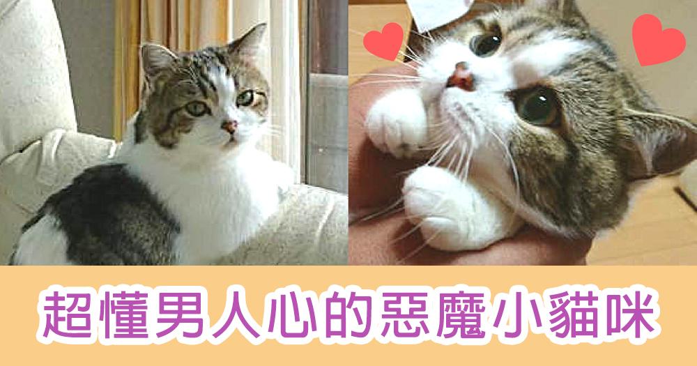 貓咪也懂察言觀色?超懂男人心的惡魔小貓咪~面對男生時就要懂撒嬌啊喵!