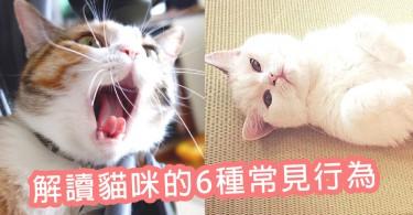 為什麼會發出呼嚕聲?解讀貓咪的6種常見行為~其實喵星人在默默表示牠喜歡你啊!