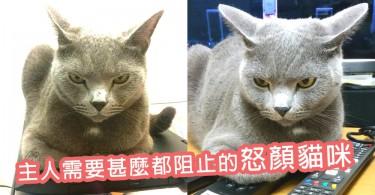 朕就是不爽!超霸道怒顏灰色貓咪~主人需要甚麼東西牠都要阻止 !