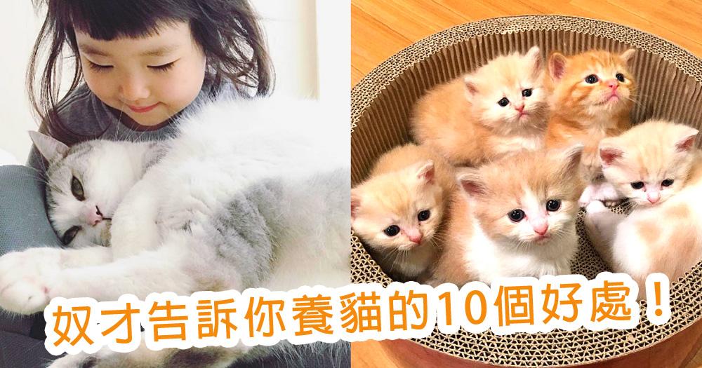 好想養貓啊!養貓的10個好處~貓奴才們都一定親身感受過!