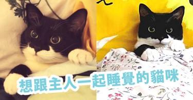 「來一起睡啊!」想跟主人一起睡覺的誘人貓咪~面對這樣的貓咪誰不心動?