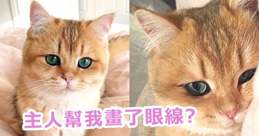 超迷人的眼睛!天生像畫了眼線的小貓~楚楚可憐的眼睛令貓奴融化了!