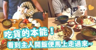 吃貨的本能!看到主人開飯便馬上走過來的貓咪~主人每一餐也太豐富了吧!