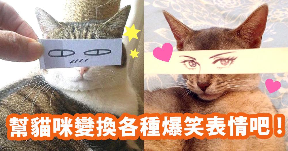 奴才你玩夠了沒有?一張紙就能幫貓咪變換各種爆笑表情~跟主子在家玩這個吧!