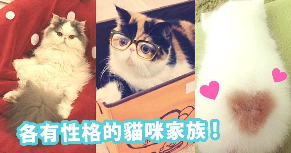 背上有小愛心的小貓咪!這個貓貓爆萌家族~完全令貓奴的心都融化掉!