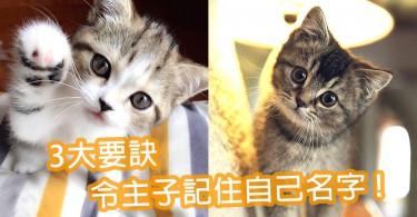 貓貓記不住自己名字?訓練主子記住名字的3大重點~以後就可以輕鬆呼喚貓咪!