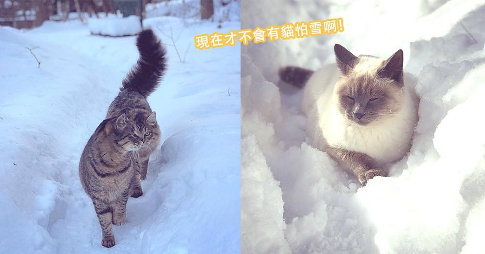 這小小的寒冷朕才不怕!9位主子在雪地中自在地嬉戲,朕就是在哪裡都盡顯霸氣!