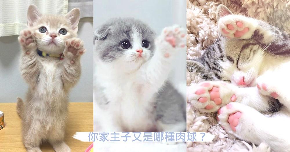 貓咪也可以看掌相?主子肉球看出5種不同性格,肉球也可以知道很多事情啊~