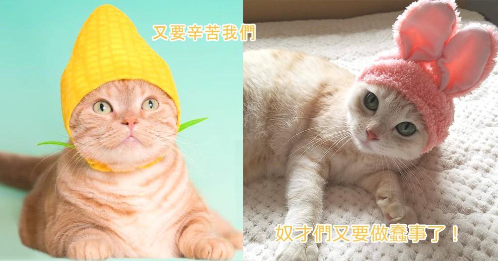 主子們終於變成野菜?日本推出全新「野菜系列」頭套,聽到貓主子們的哀怨聲響起了~