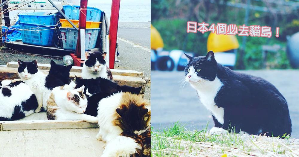 放在口袋清單吧!精選4個貓奴必去日本貓島,被主子們繞著寵幸的幸福感~