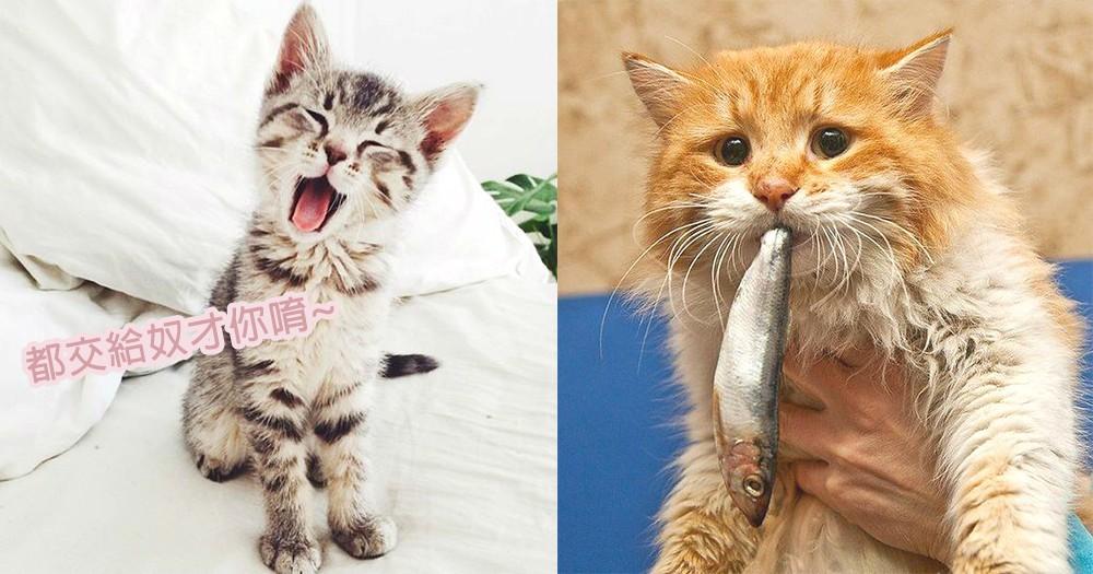 新手必讀!4個貓奴常見的養貓錯誤,主子的飲食、清潔都要辦妥妥~