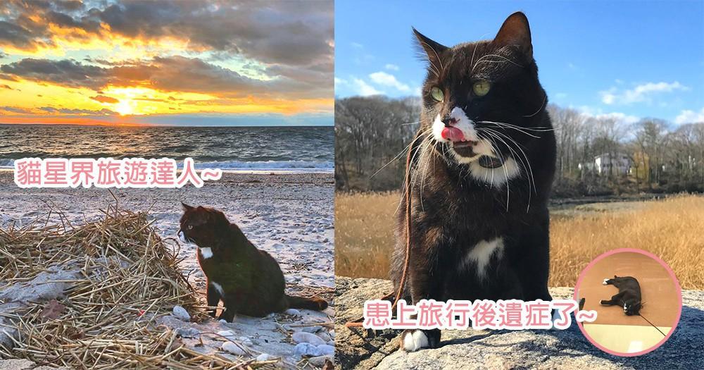 貓星界的旅行達人!美國貓星人上山下海征服世界,但卻患上了「旅行後遺症」?