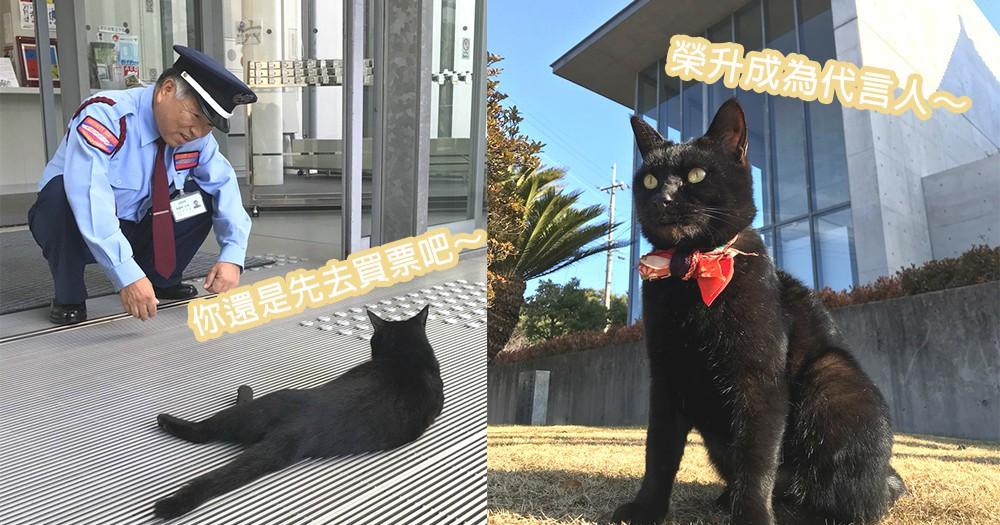 貓貓也要吸收藝術氣息!沒有買票想要偷進美術館的小黑貓,成為美術館的最佳代言人了~