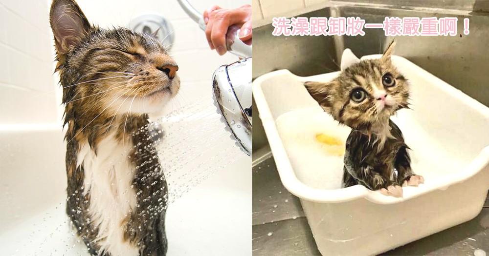 髮型就是生命!10位遇水像卸妝的可愛喵星人,這才是主子們拒絕洗澡的原因吧~