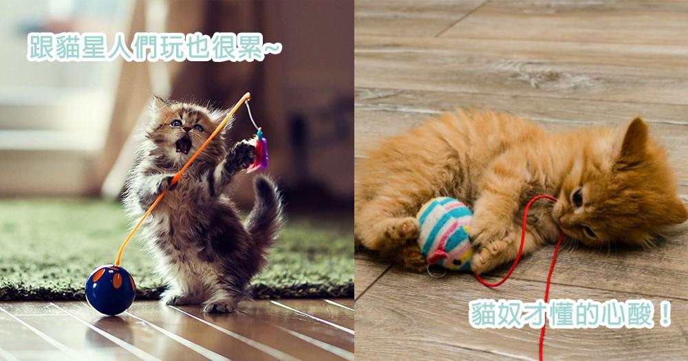 貓奴們的大同感!跟貓星人們玩根本是在戰鬥~是在玩逗貓棒還是我們啊?