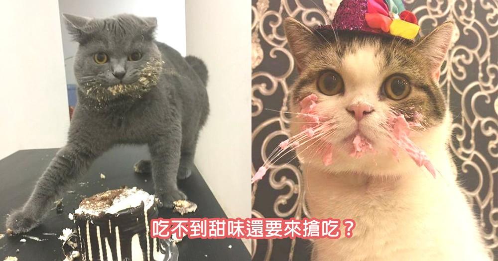 貓咪最愛搶奴才們甜食?原來貓咪們都沒有甜味細胞!奴才們要注意主子們的健康~