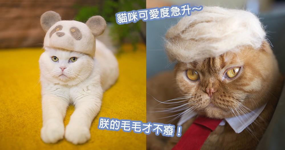 貓咪癈毛也可以回收!日本達人巧手製可愛「貓毛氈帽」,Cosplay大賽正式開始~