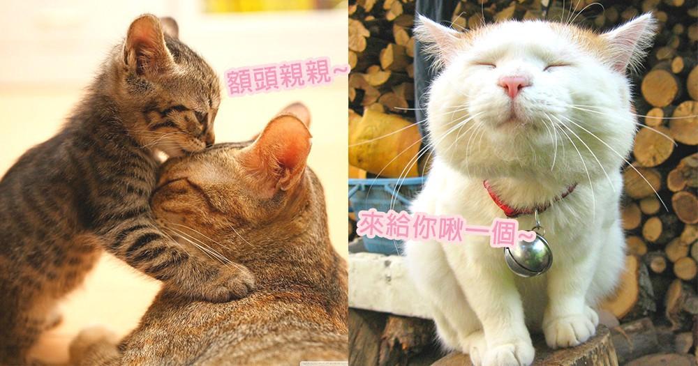 奴才們你懂嗎?貓咪們親親的背後重要意義,主動給奴才親親實在太暖!
