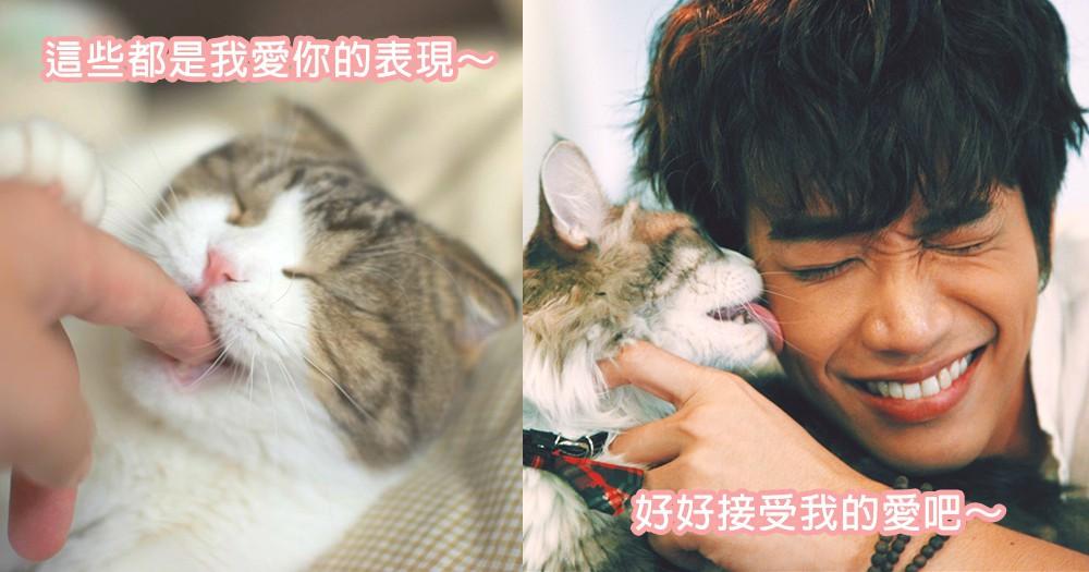 貓咪的愛很霸道!11個貓咪們表達愛意的方法,奴才們接受貓咪滿滿的愛吧~