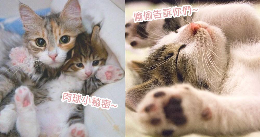 肉球不止是用來給奴才按!5個貓咪們藏著的肉球小秘密,貓星人的肉球這樣用喔~