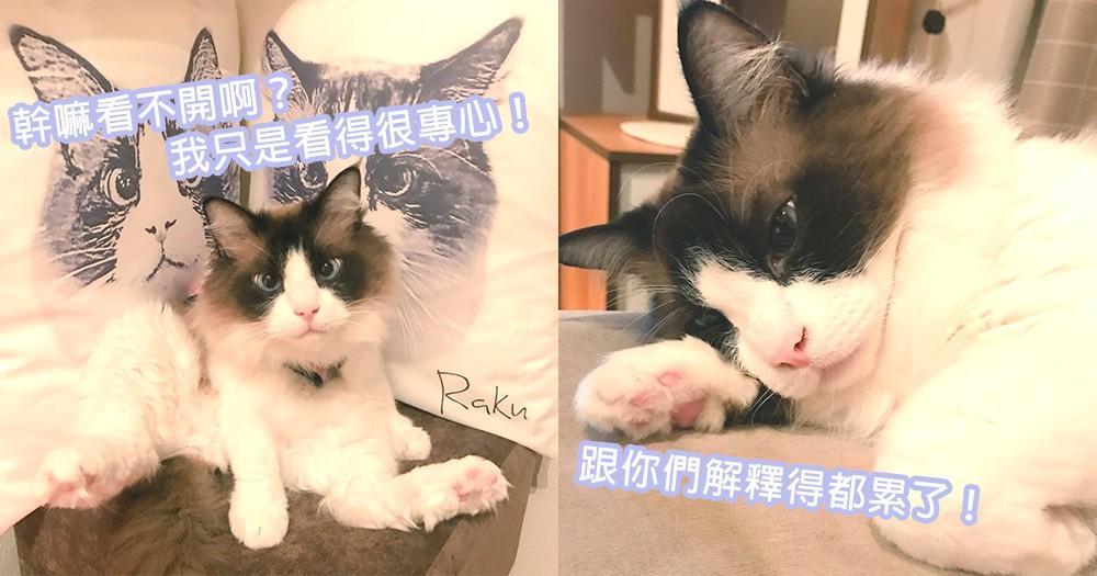貓喵也常被誤會看不開?東京人氣咖啡店網紅小貓店主,人家只是看東西很專心!