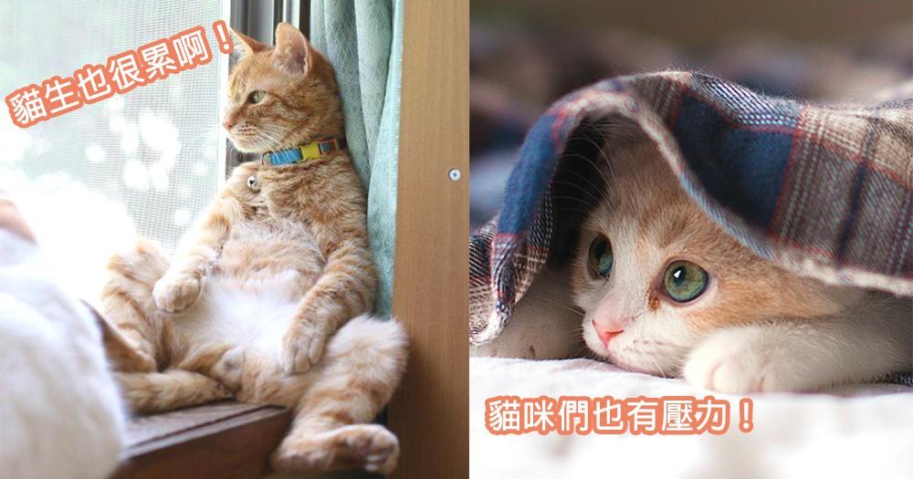 主子們的壓力你知嗎?3個貓咪們受到壓力時出現反應,要好好關懷貓星人情緒~