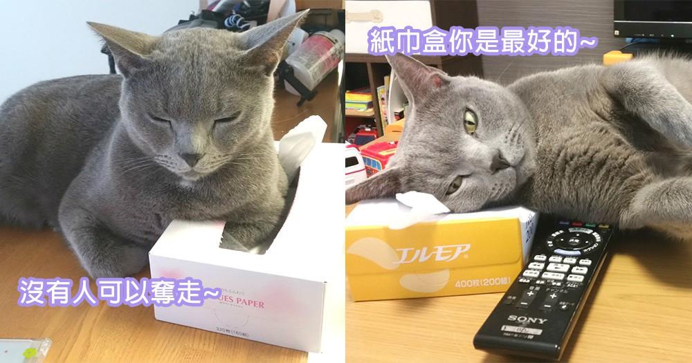 貓咪戀上紙巾盒?只愛賴著紙巾盒的貓星人!飛機耳下譜出另類戀情~