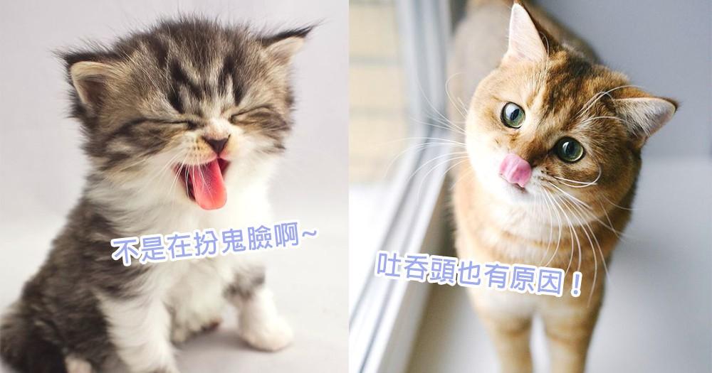 喵星人也愛吐舌頭!4個貓星人愛吐舌頭可愛原因,才不是在跟你扮鬼臉呢~