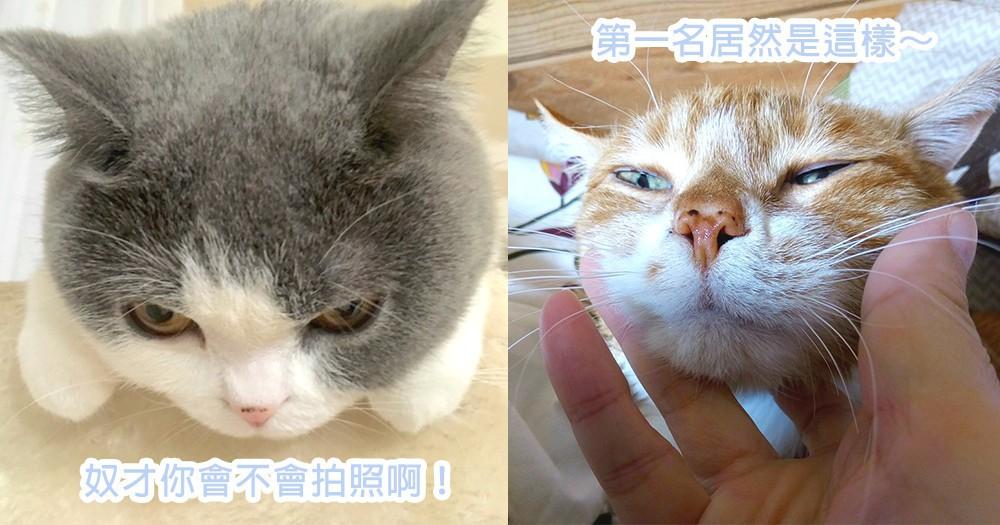 貓咪醜照流出了!日本網民舉辦貓咪失手照大賽,連主子都為奴才拍照技術汗顏~