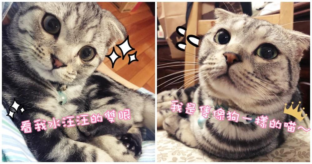 貓界孔劉!這麼可愛的貓咪誰不愛呢~直接抱緊處理啦!