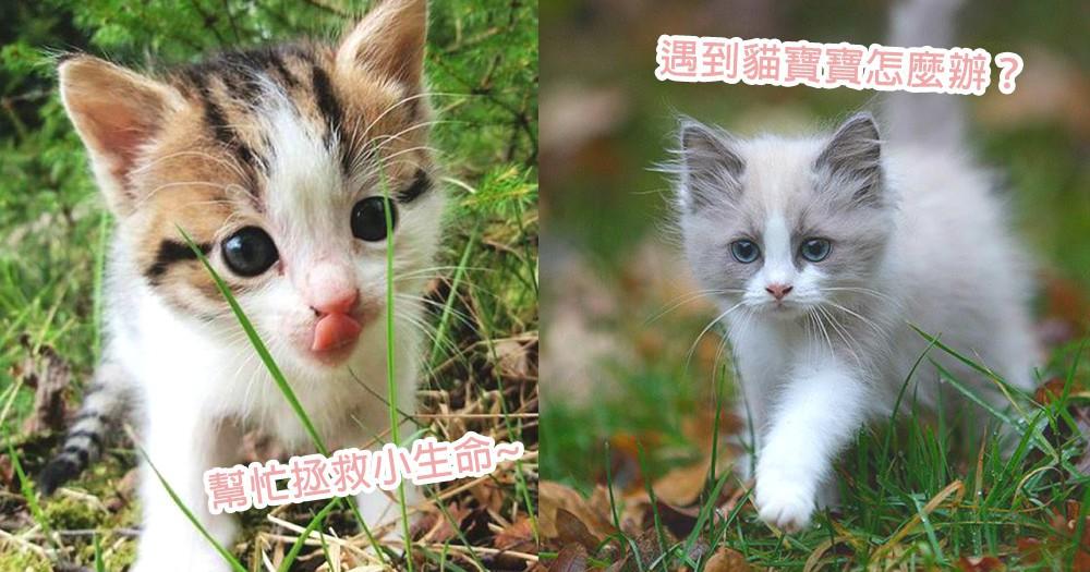 街上遇到貓寶寶怎麼辦?4個遇上貓寶寶的必要小知識,迎接降臨世界的美好小生命~