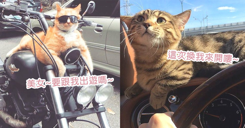 工讀生你趕快出來!貓星人們要開車來趟「公路旅行」~奴才你準備好出遊了嗎?