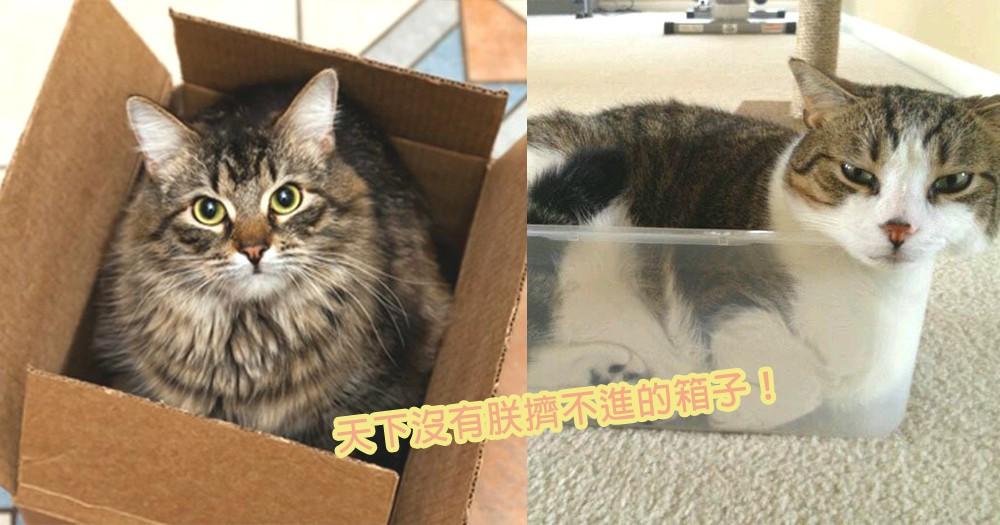 朕真的只是「虛胖」而己!9位硬擠進小紙箱中的貓星人,再小的空間朕也擠得下!