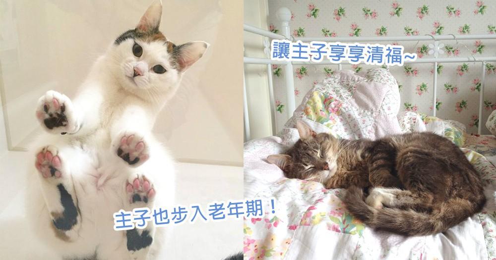 好好度過老年的的光陰~8個貓星人也步入老年期的特徵,與主子共渡最後的美好時光~