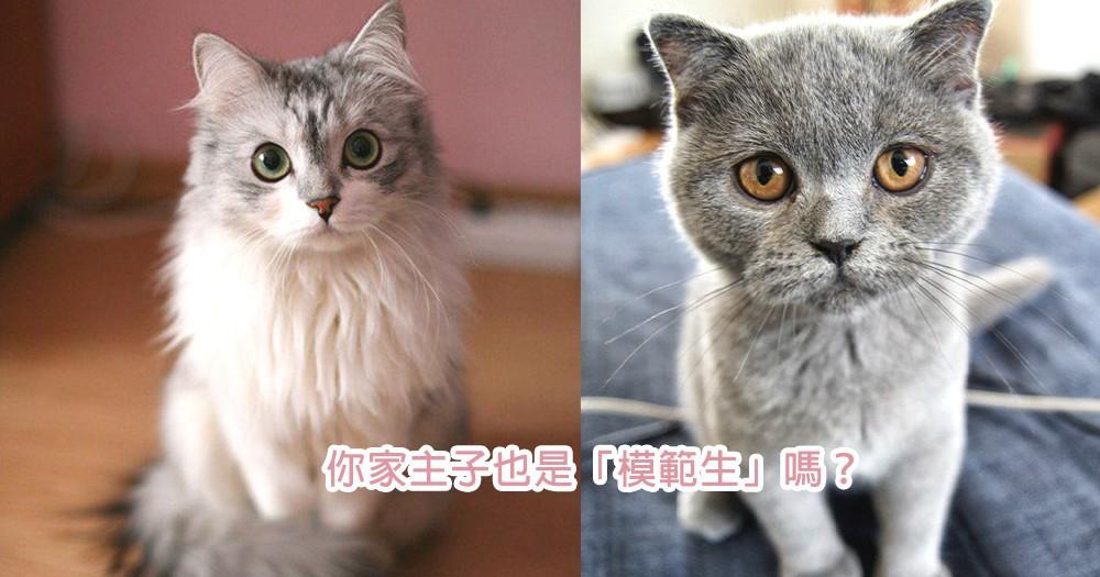 你家主子有上榜嗎?5位貓界「乖乖模範生」代表,所有貓咪都是最可愛的陪伴~