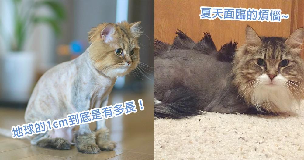 夏天要準備理髮了!10位毛髮都被脫光光的貓星人,都要產生放棄貓生的念頭了!