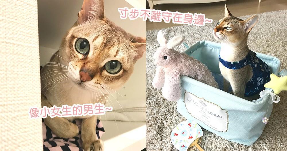 從小最好的玩伴!貓星人寸步不離同等身型娃娃朋友,是一輩子的熱烈友情啊~