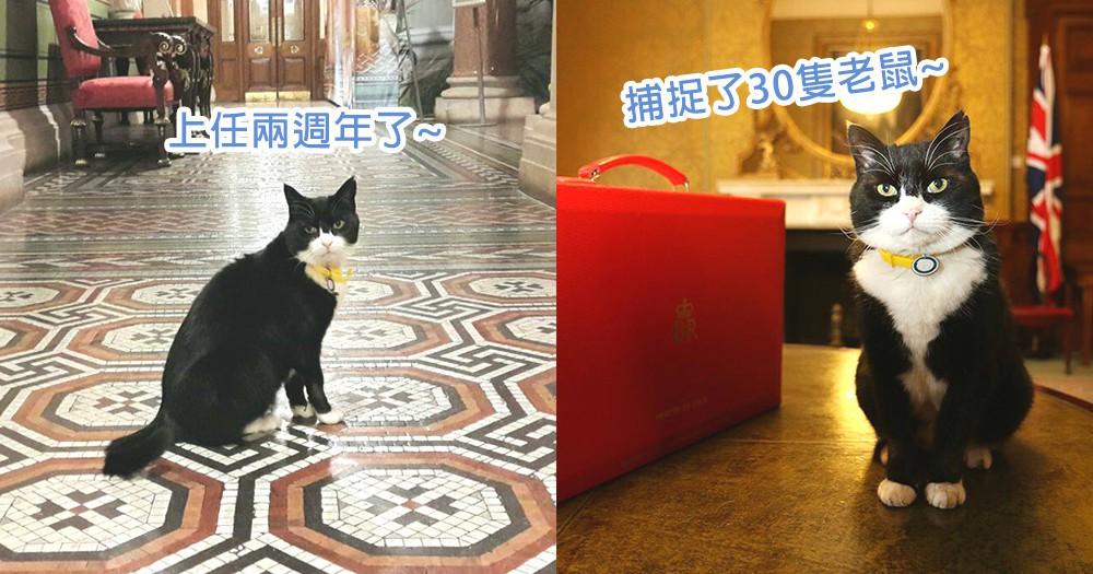 貓星人也是高官!英國外交部捕鼠官Palmerston上任兩週年,被力讚工作表現相當出色!