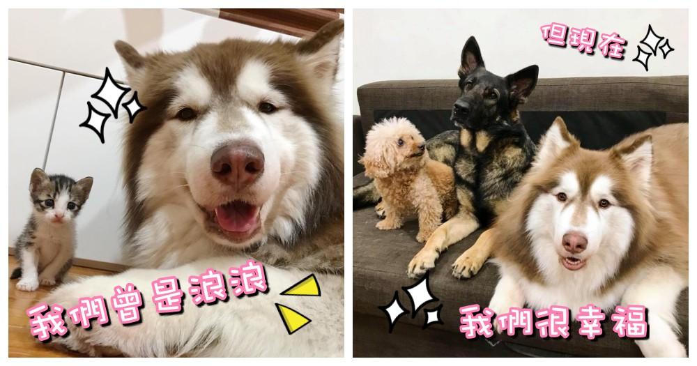 我們都曾是浪浪!但現在找到了一個溫暖的家~開始 3 狗 1 貓 好笑又溫馨的生活~