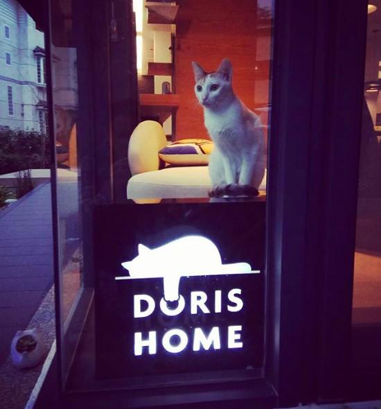 DORIS HOME 朵麗絲的家