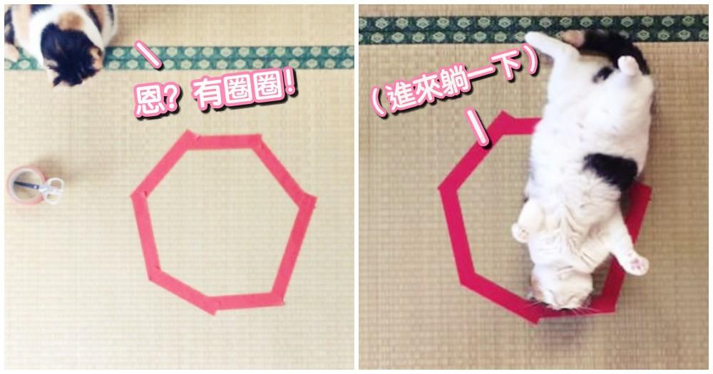 神秘!貓咪吸引裝置~用膠帶在地板黏個圈圈,貓咪就會自動坐進去!