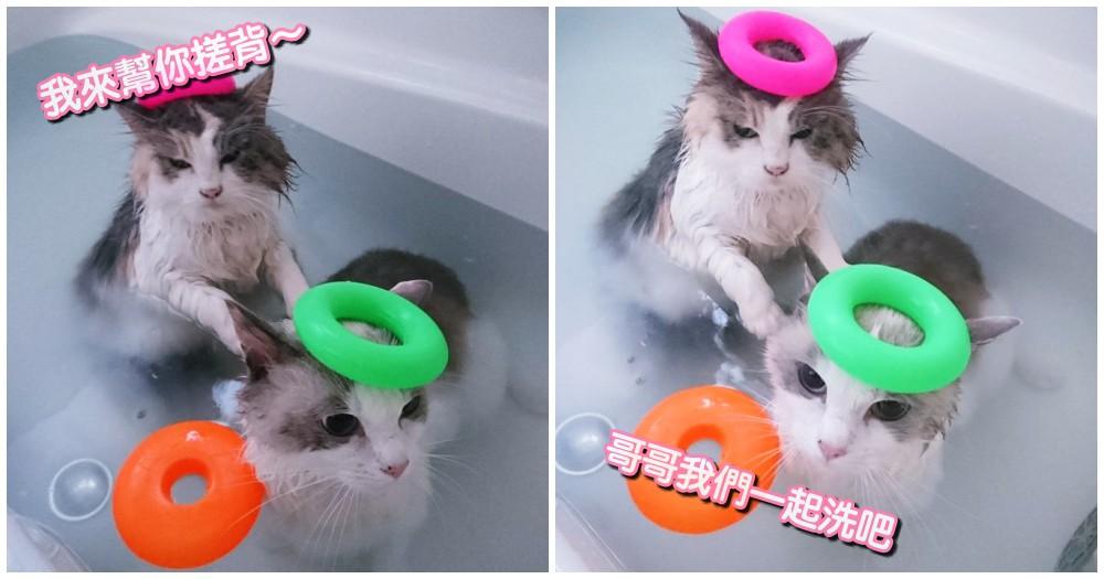 這家奴才好幸福!日本兩隻喵星人超愛洗澡,網友崩潰喊: 我家跟你換!
