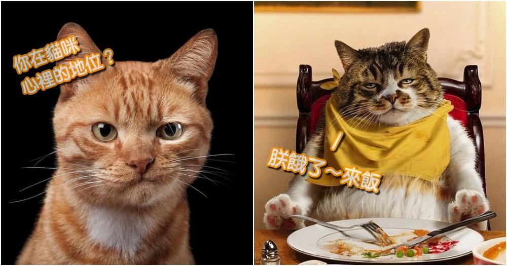 奴才也是有分地位der!人類在貓咪心中的 5 種地位,快來看看你是哪一種!
