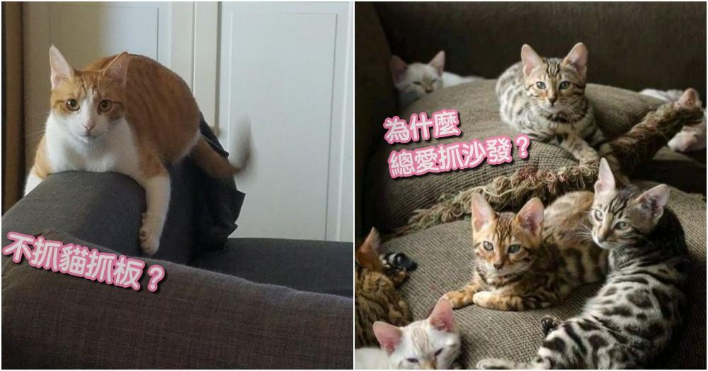 沙發總是被抓壞!比起貓抓板,貓咪更愛沙發的原因...喵皇說不出口的秘密!