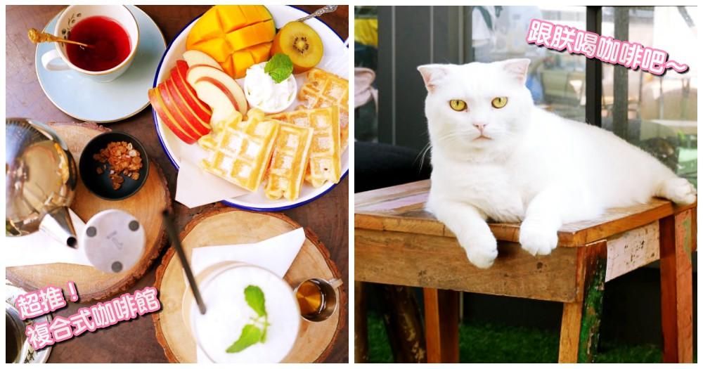 激推!店貓坐鎮~隱身巷弄內的小天地,新竹複合式沙龍咖啡館~