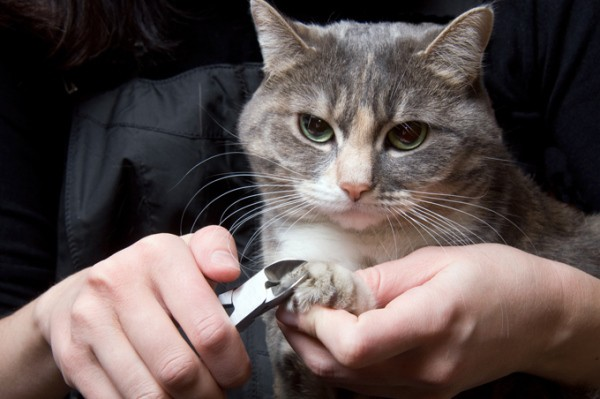 http://www.wtcathotel.com/Cat-Knows/note/cut-cats-nails