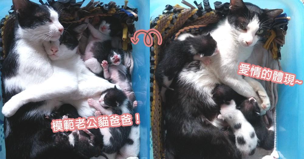 找老公就是要找這種!貓媽媽生產後被貓爸爸甜蜜擁入懷中,這就是愛情的最高體現~