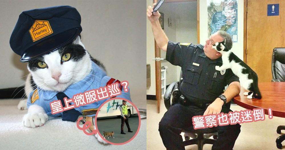 難度是貓皇出巡?貓咪悠閒過馬路由交通警開路,警察們也馴服於貓星人魅力下~