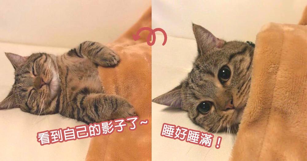 貓星人為你示範!貓咪超可愛模樣入睡過程,網友們都看到自己晚上的身影了!